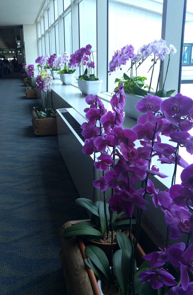 orchids at Okinawa airport