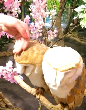 Owl forest and Bengal Cat cafe in Tokyo