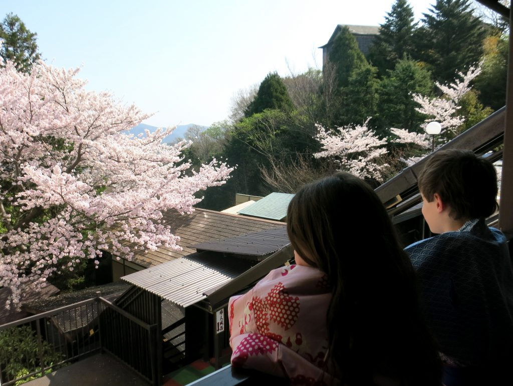 Cherry blossoms at Arima Onsen